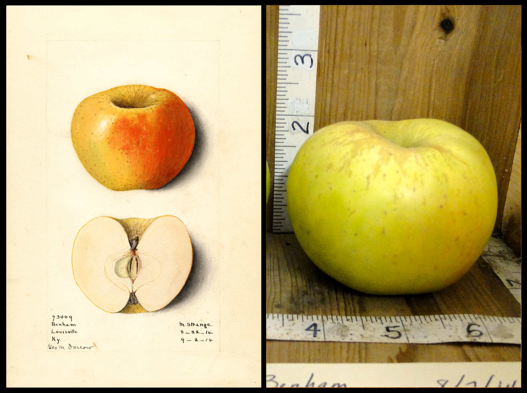 greenish yellow apple with slight blush