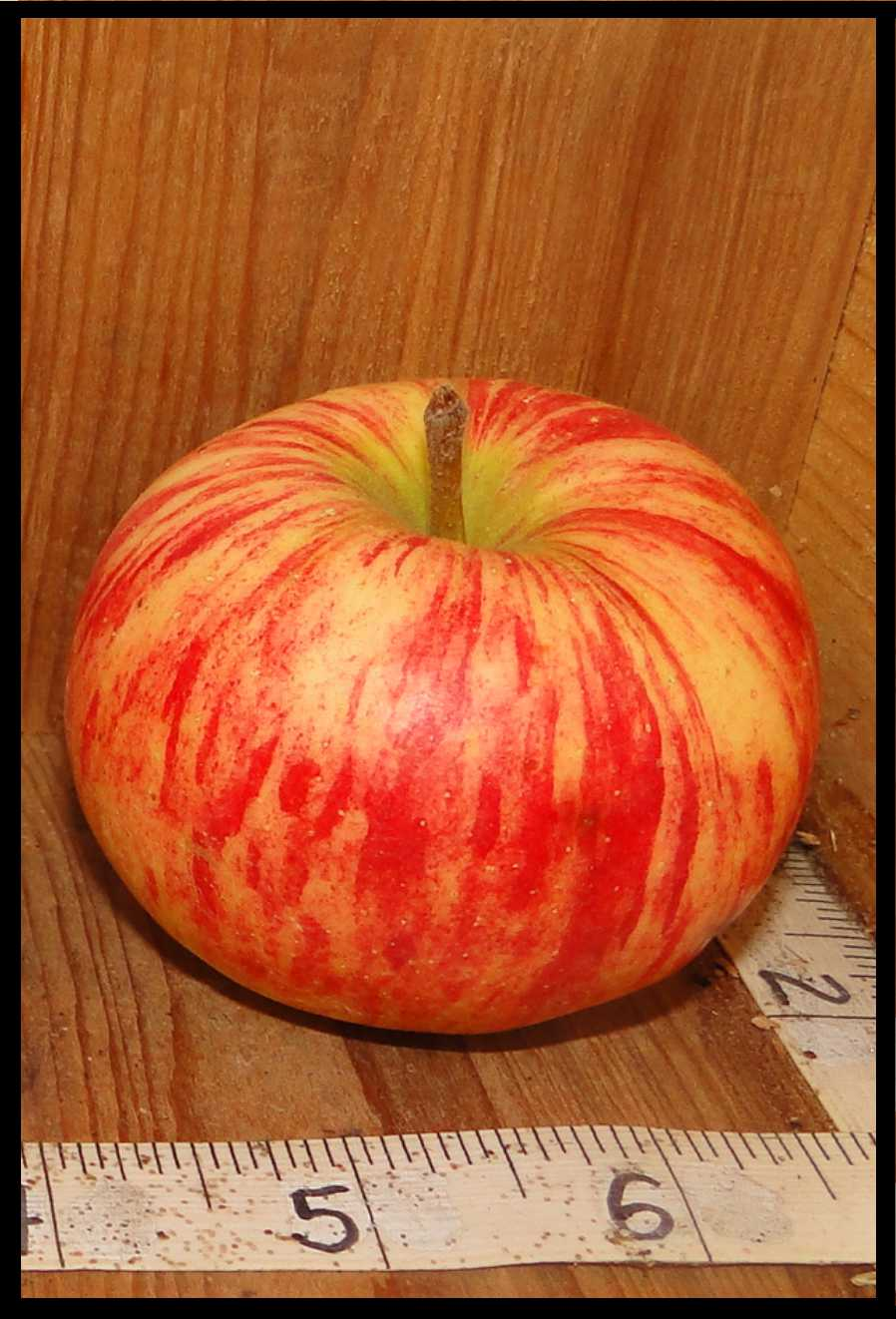red and yellow striped apple