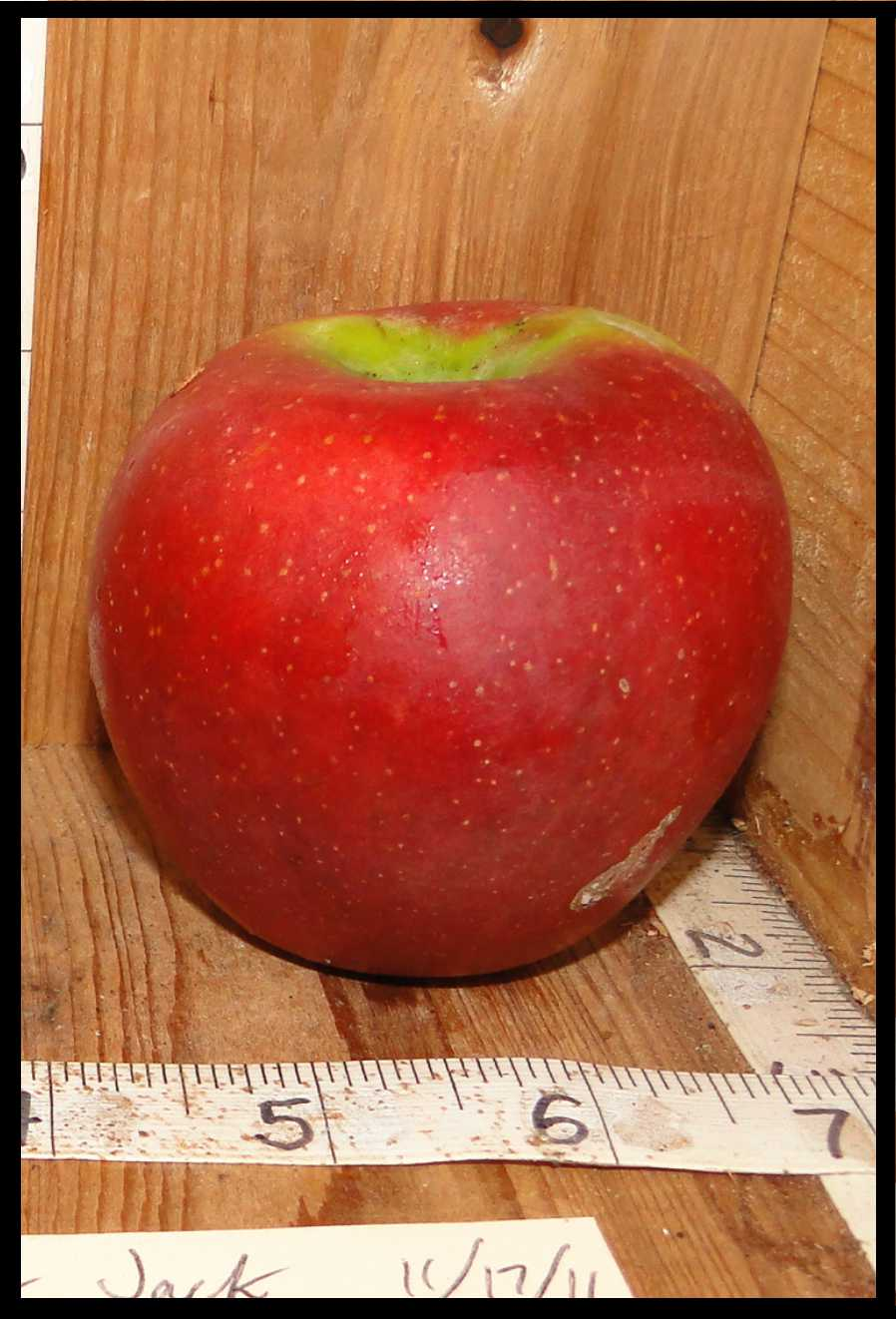 red apple with small white spots and green skin near the stem