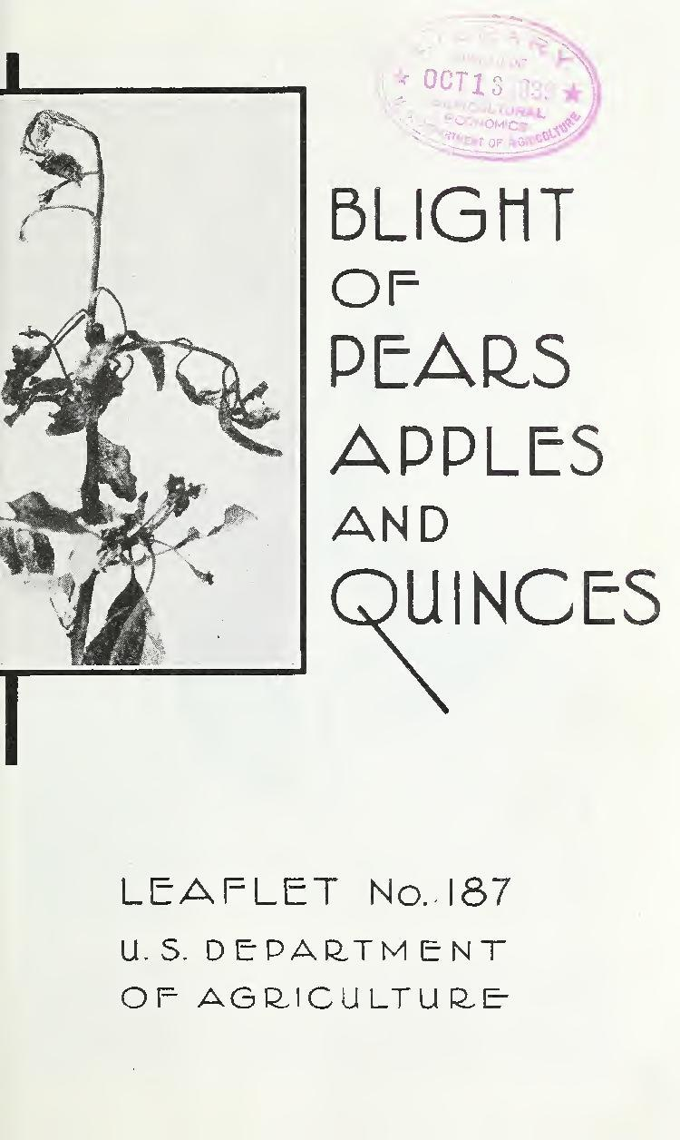 cover of a vintage pamphlet about fruit tree blights and with an image of a blighted tree