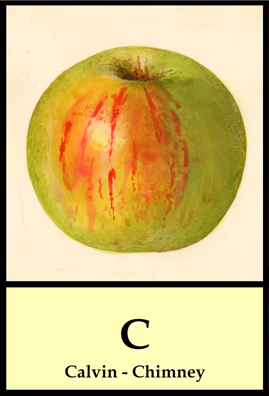 C apples - Calvin to Chimney