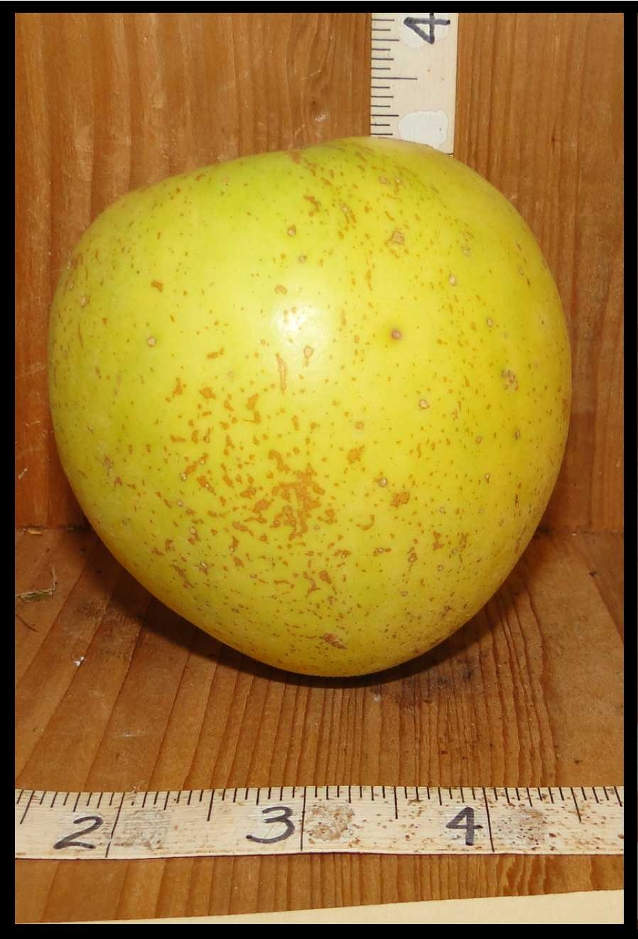 yellowish green apple with medium brown spots