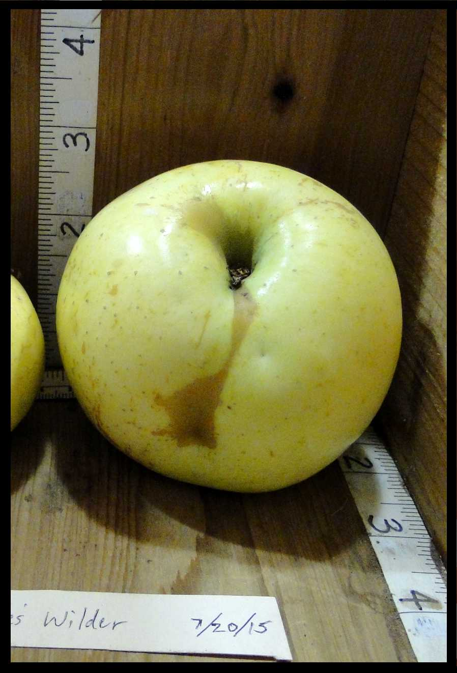 yellowish white apple with small brown spots