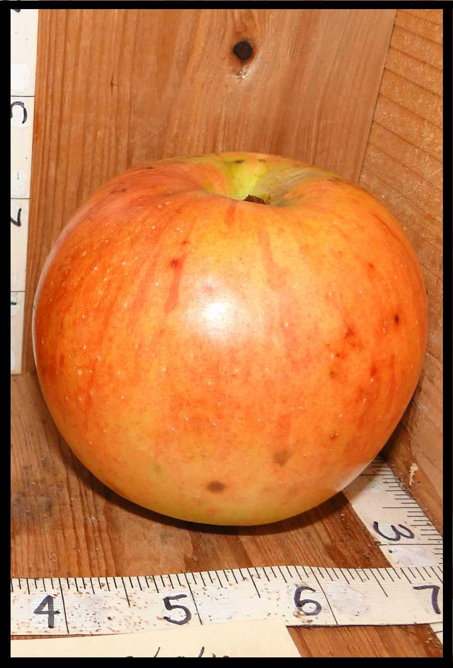 yellow apple covered in a light red blush with darker red stripes