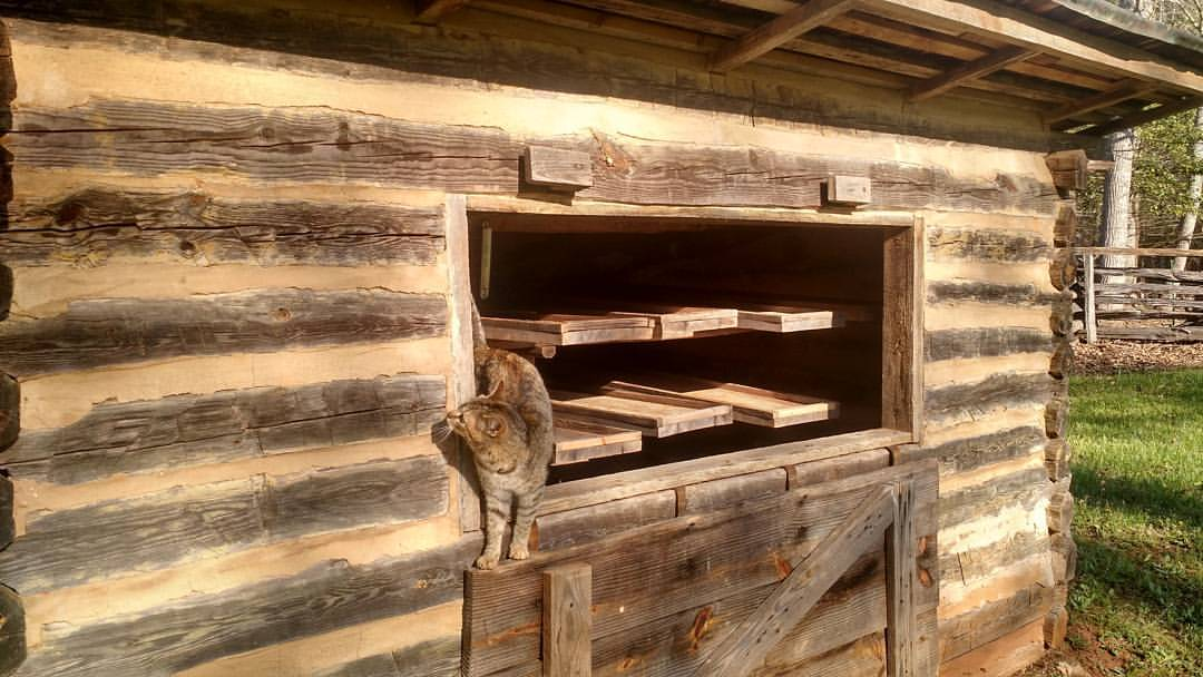 a cat exploring the apple drying barn