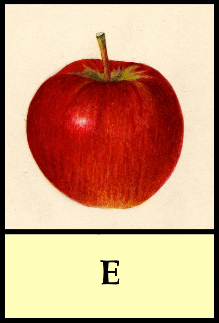E apples