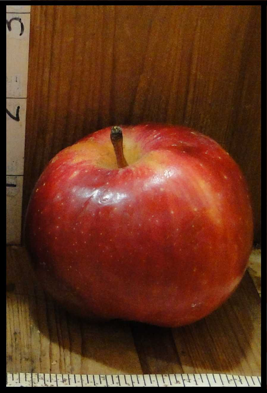 red apple with small white spots and patches of yellow