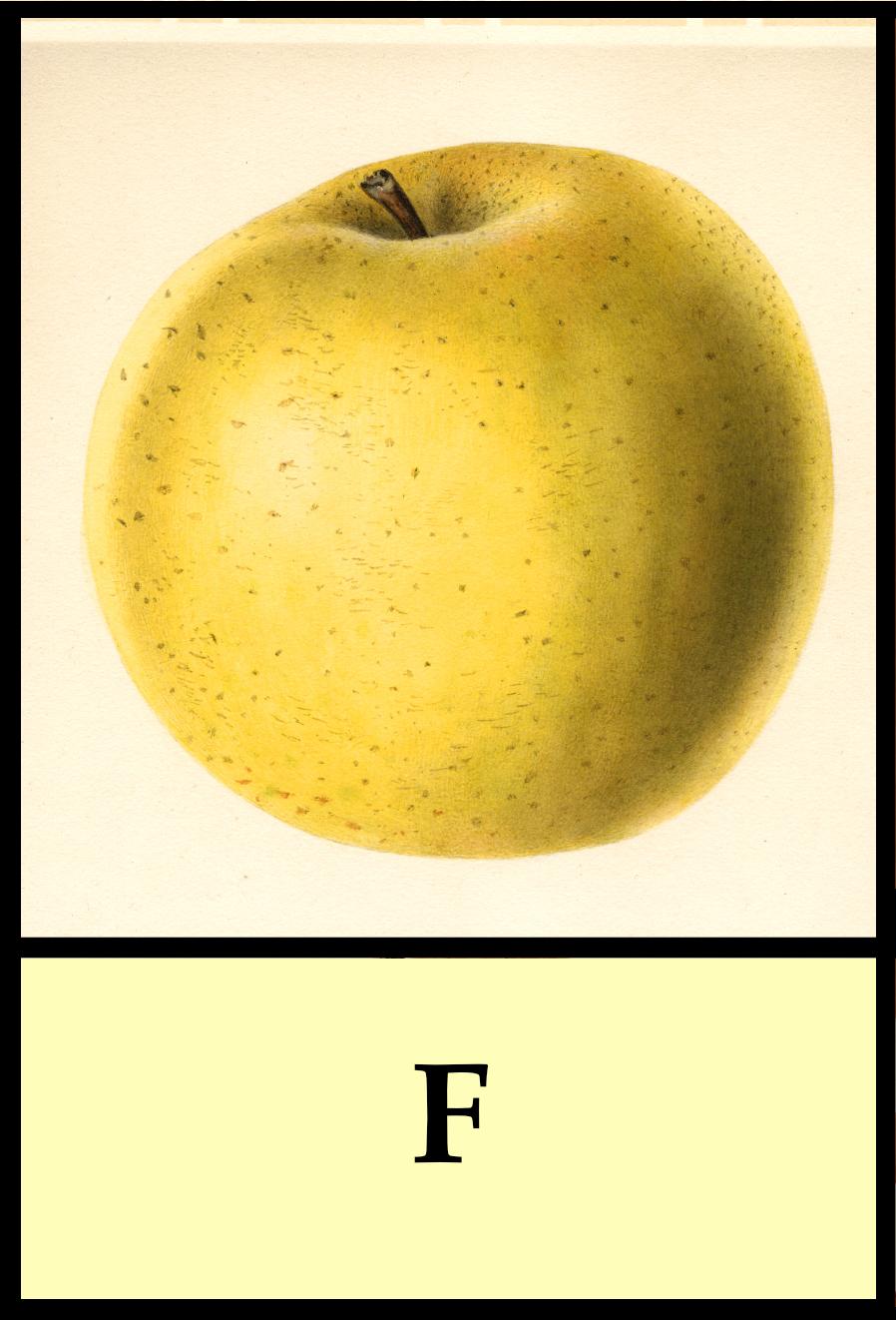 F apples