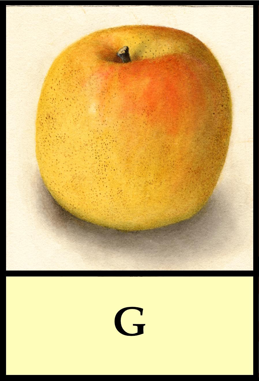 G apples