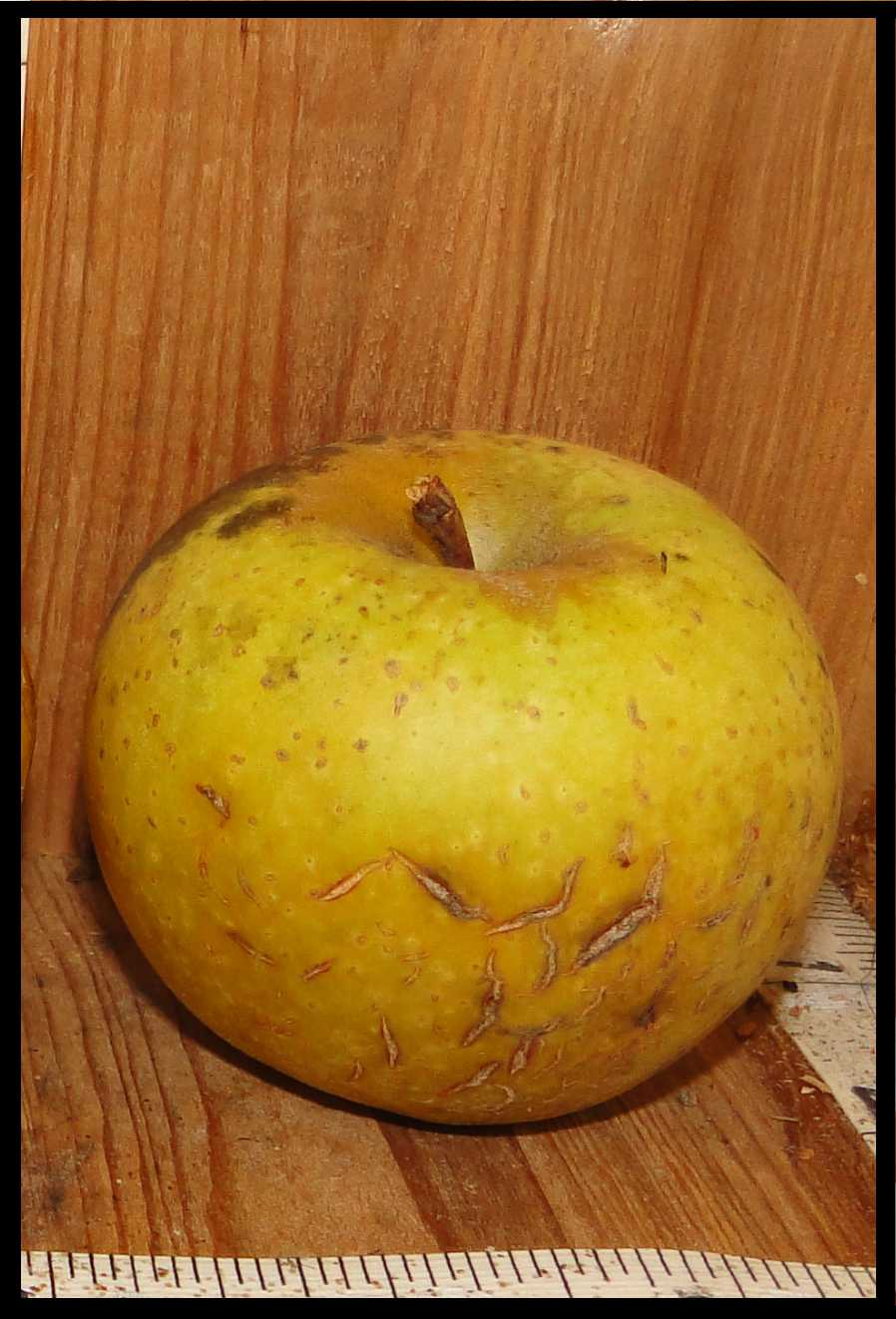 greenish brown apple with tan dots, rough tan skin near stem, and cracks in the skin