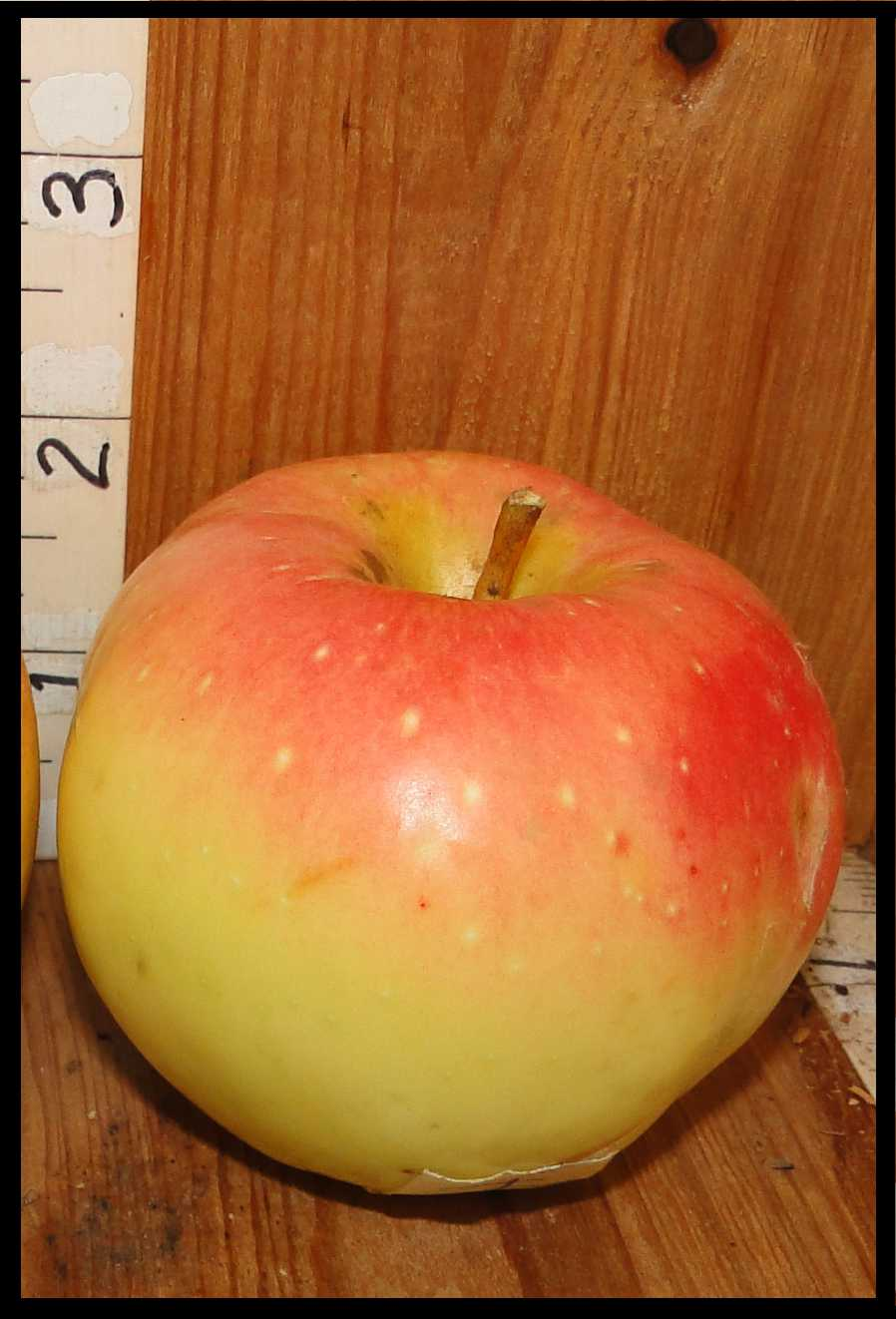 yellow apple with a pink blush on the top half