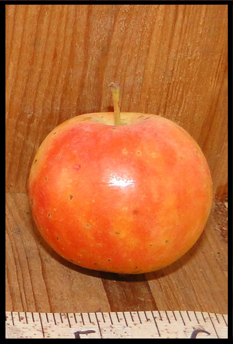 pink and yellow mottled apple