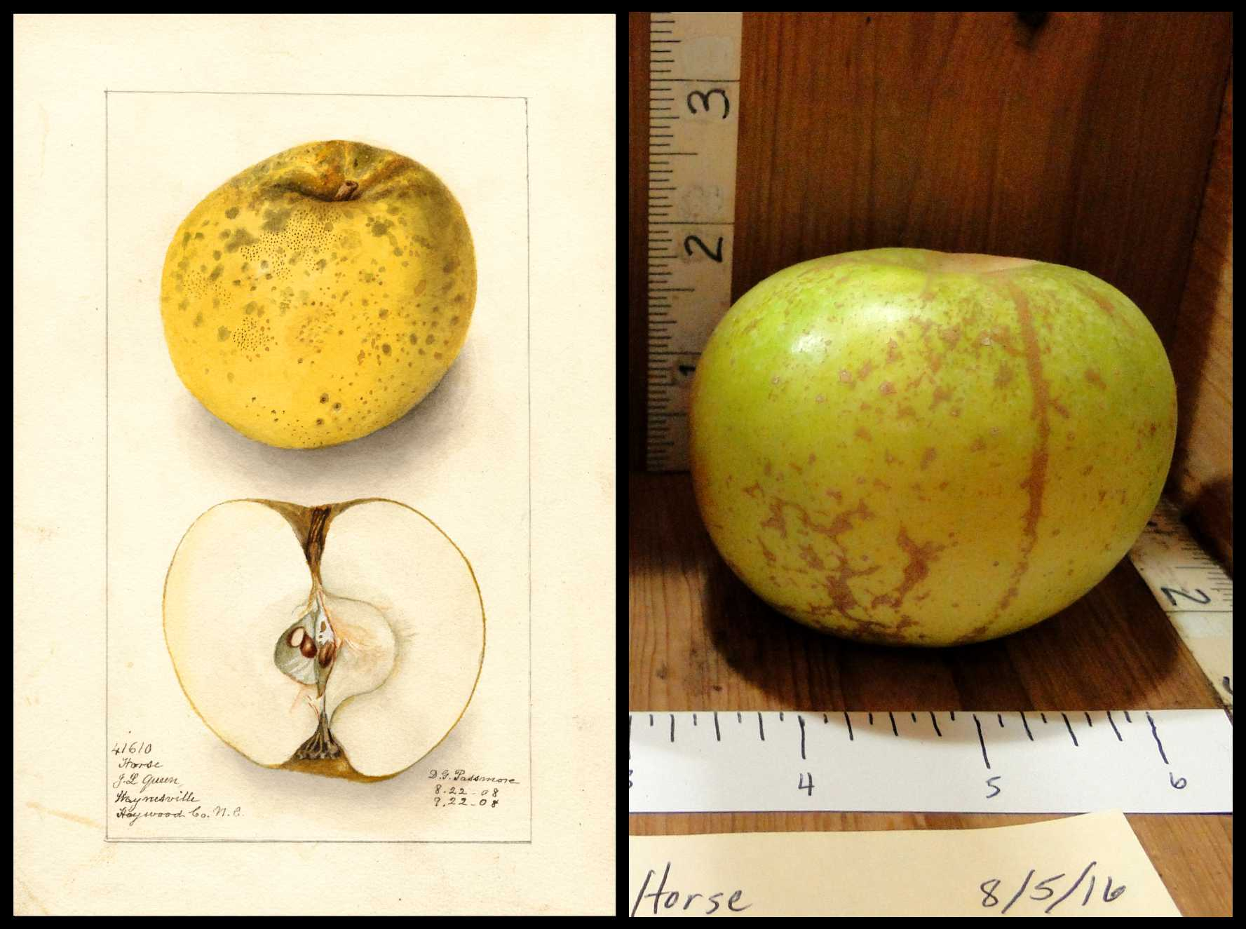 green apple with rough brown spots and stripes
