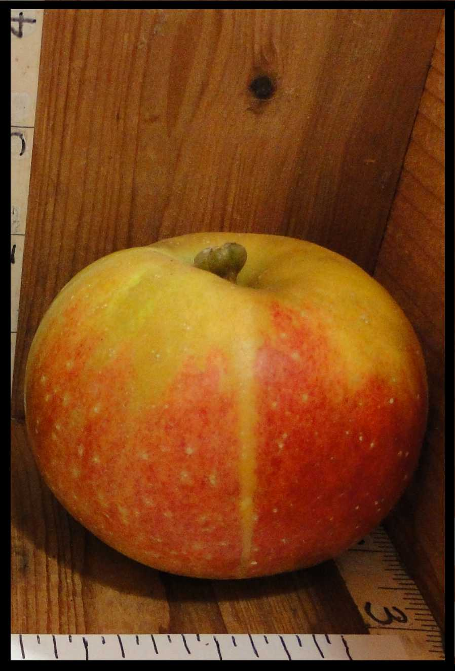 yellowish brown apple with red blush