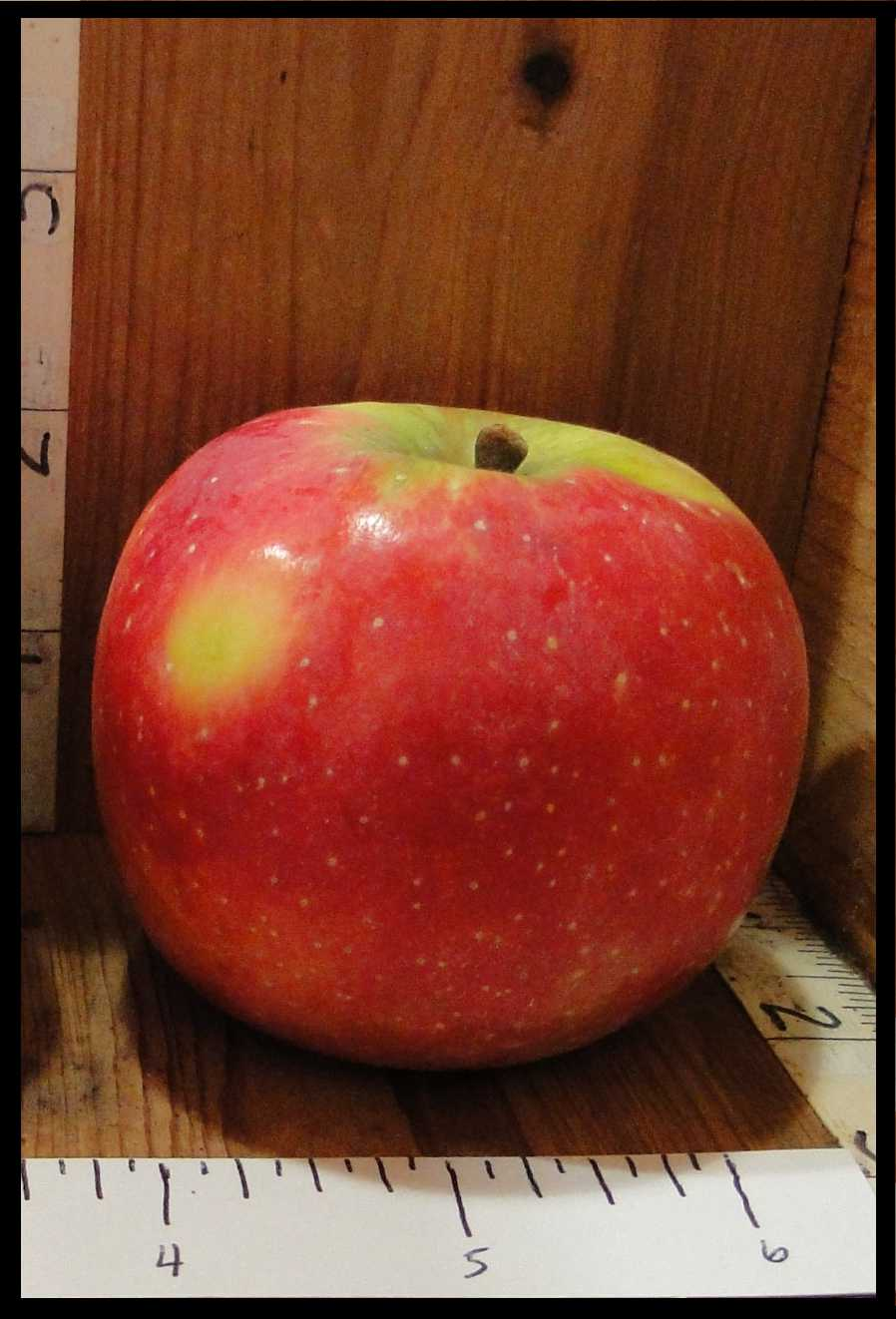 red apple with yellow patch, yellow around stem, and small white spots