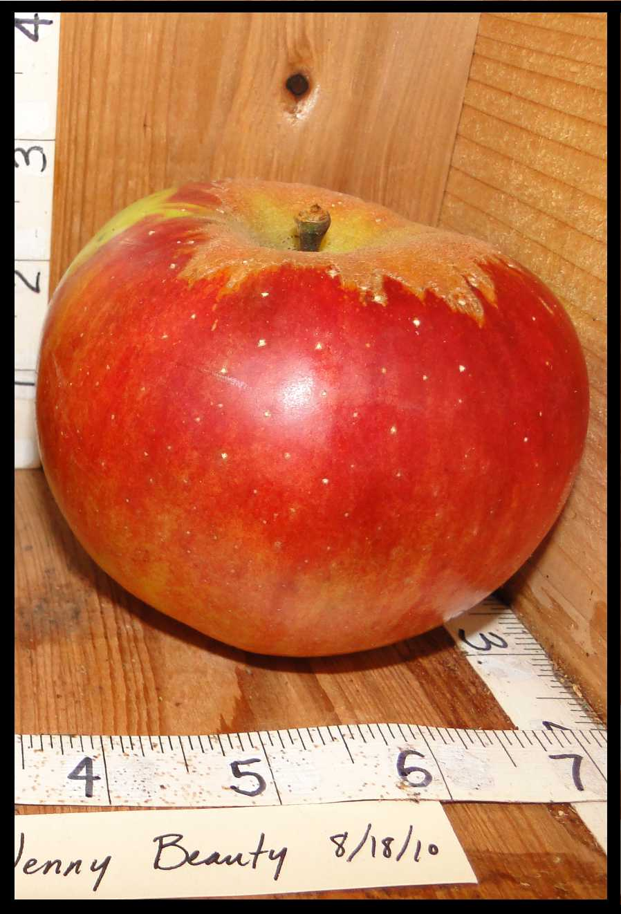 red apple with rough tan skin around stem and with small white spots