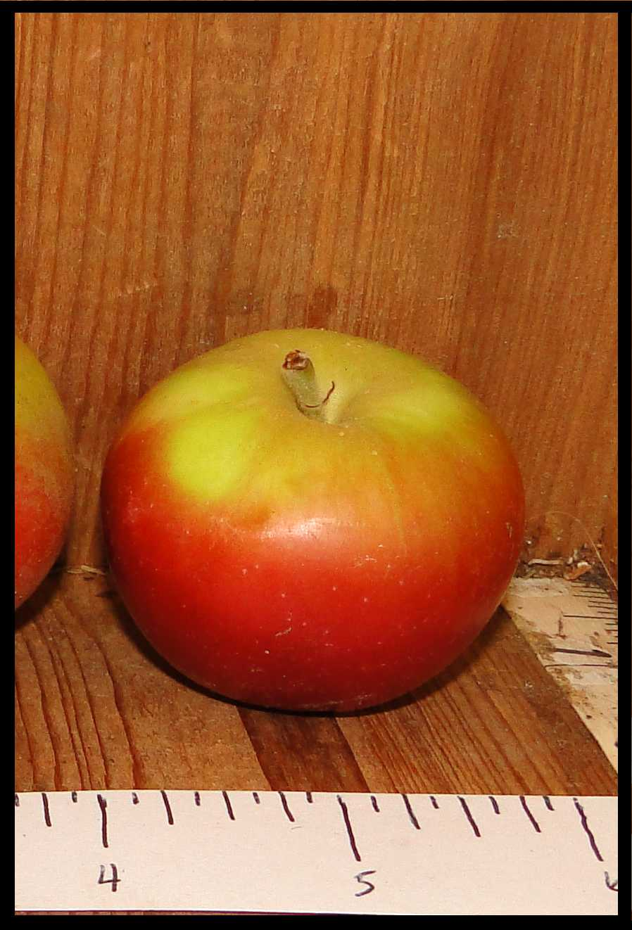 smooth round apple red on bottom and yellow on top