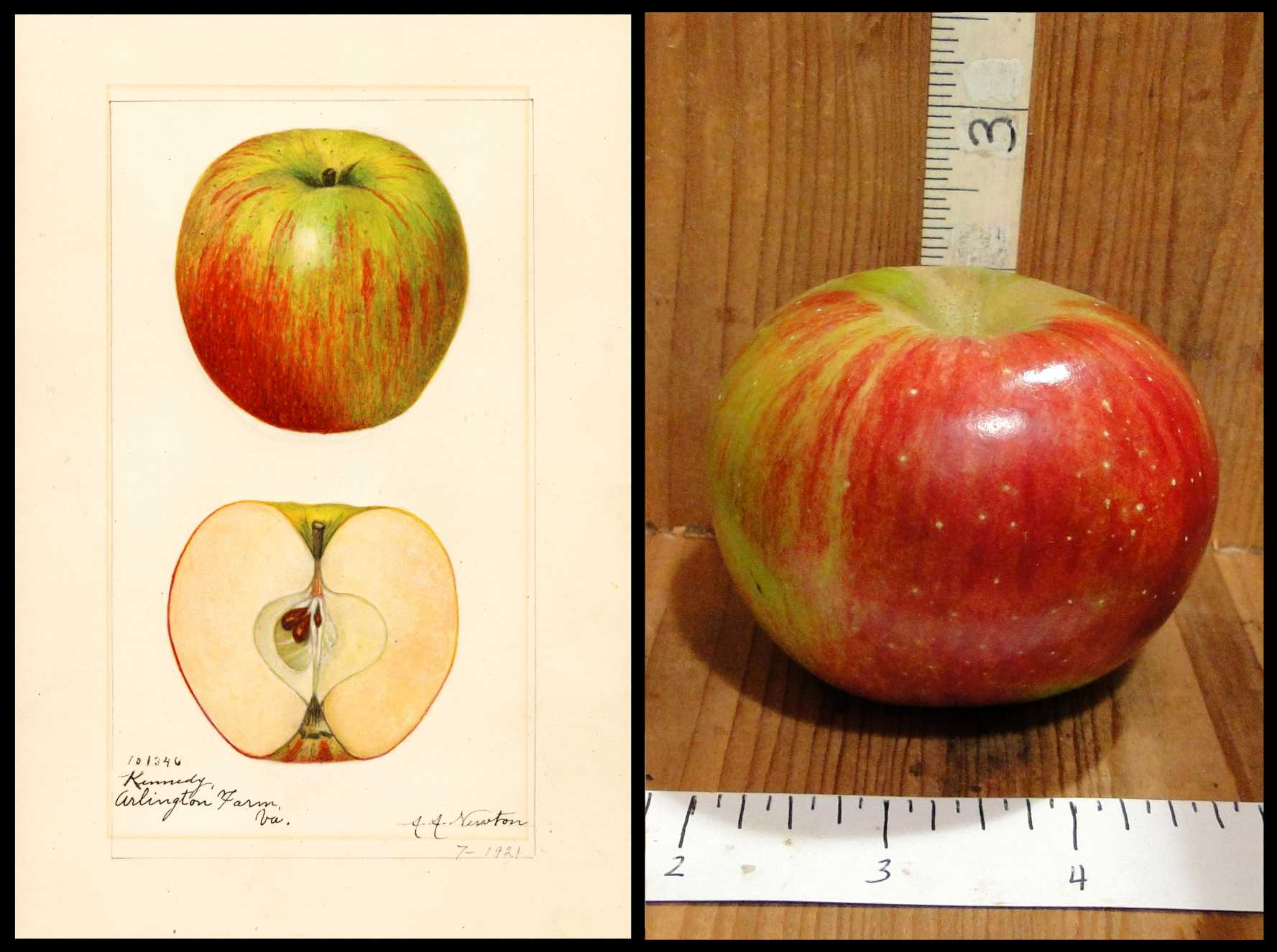 red and green striped apple