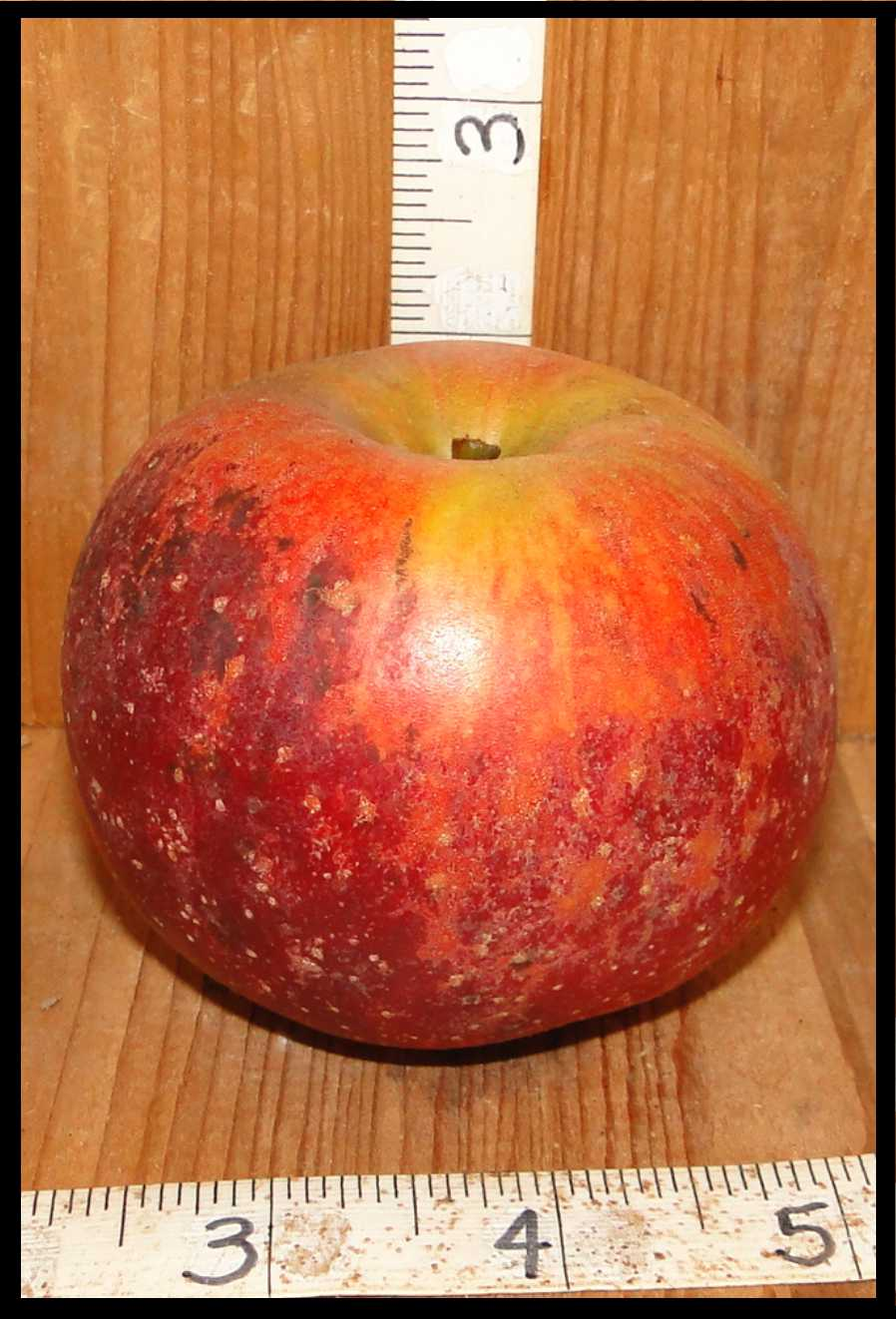 apple mottled with dark red, light red, orange, and yellow