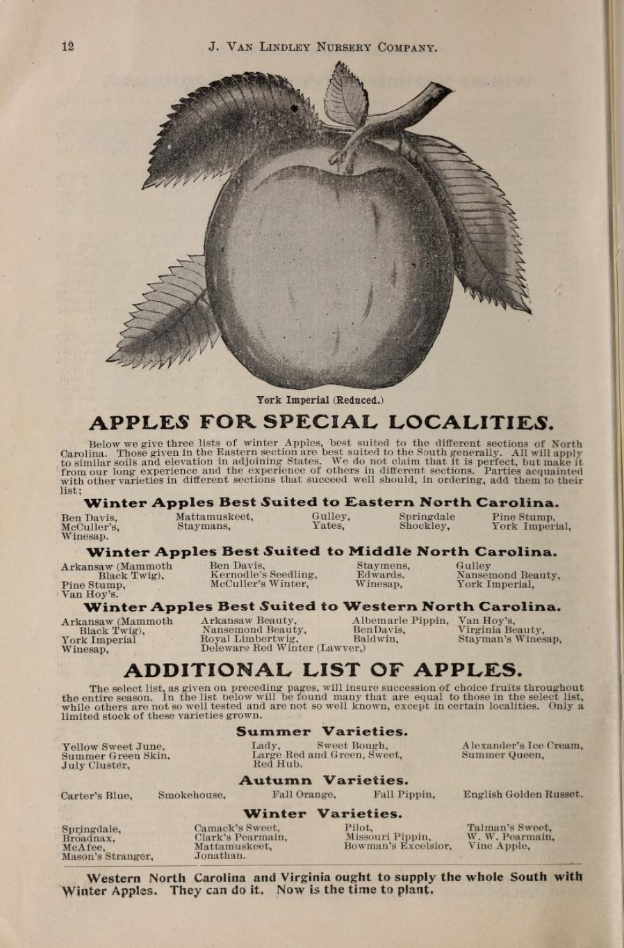Vintage apple nursery catalog page with a line drawing of an apple