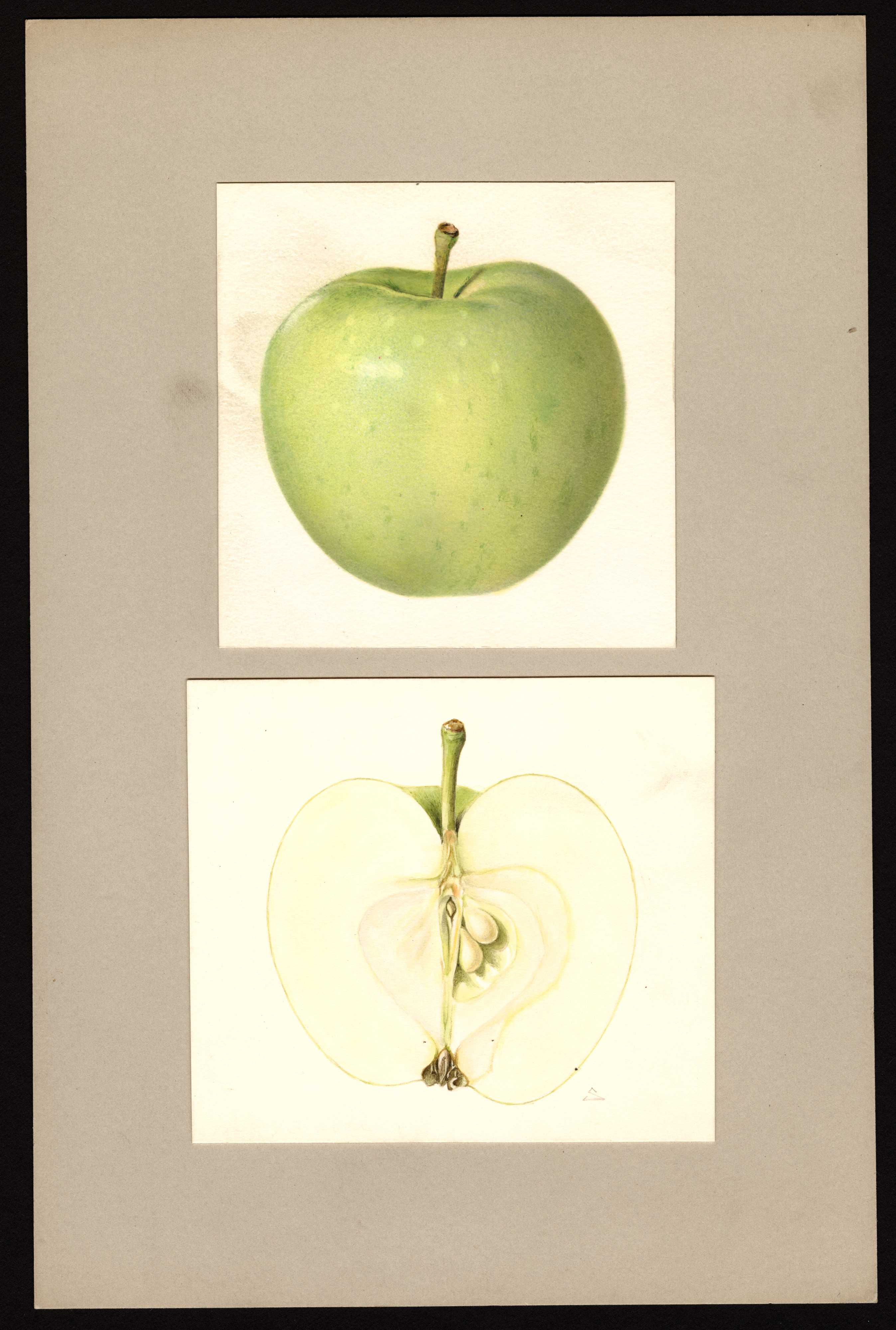 green apple with faint white spots