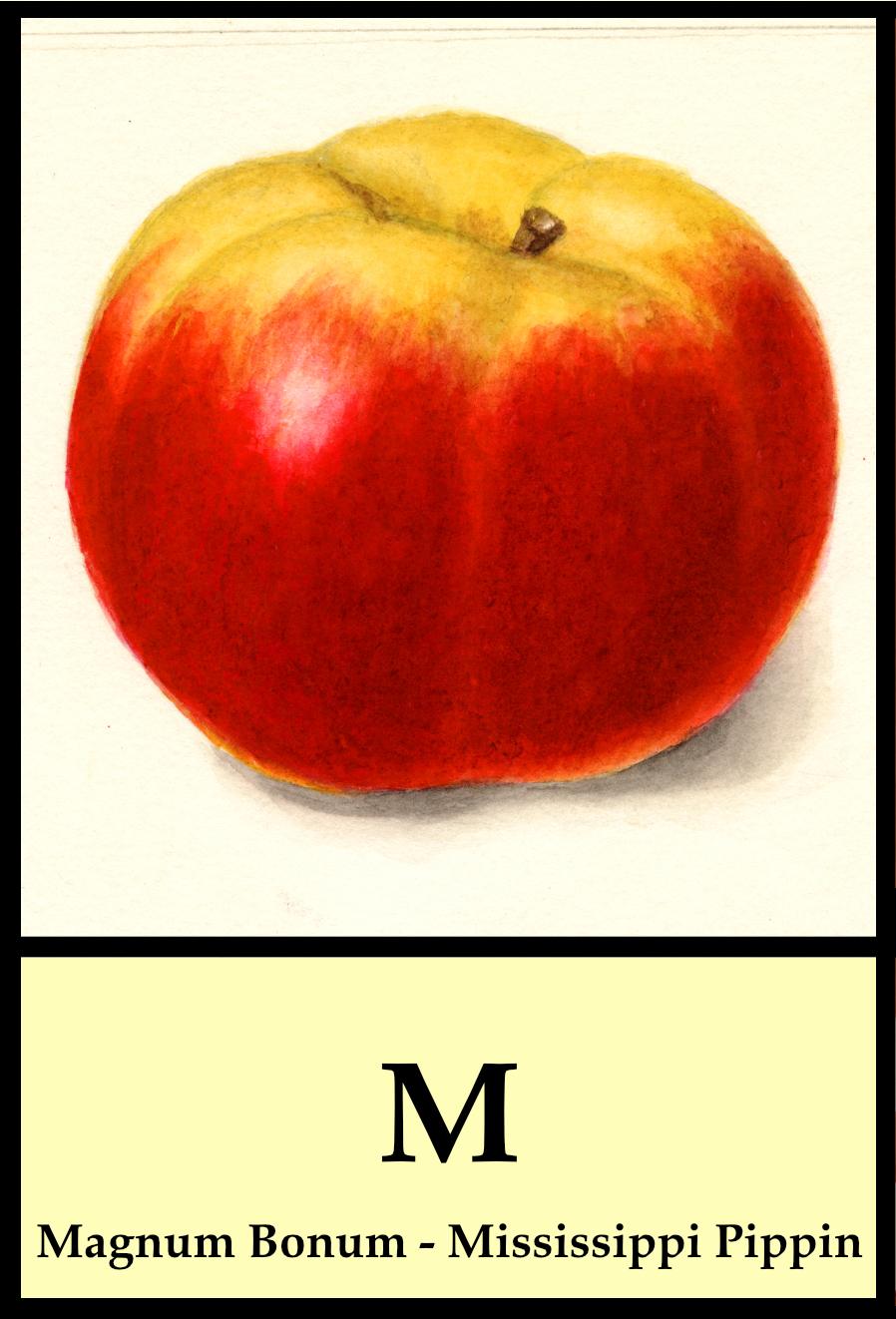 M apples - Magnum Bonum to Mississippi Pippin