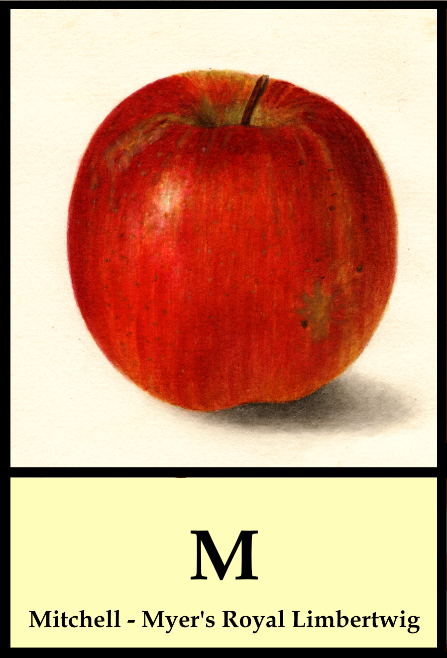 M apples - Mitchell to Myer's Royal Limbertwig