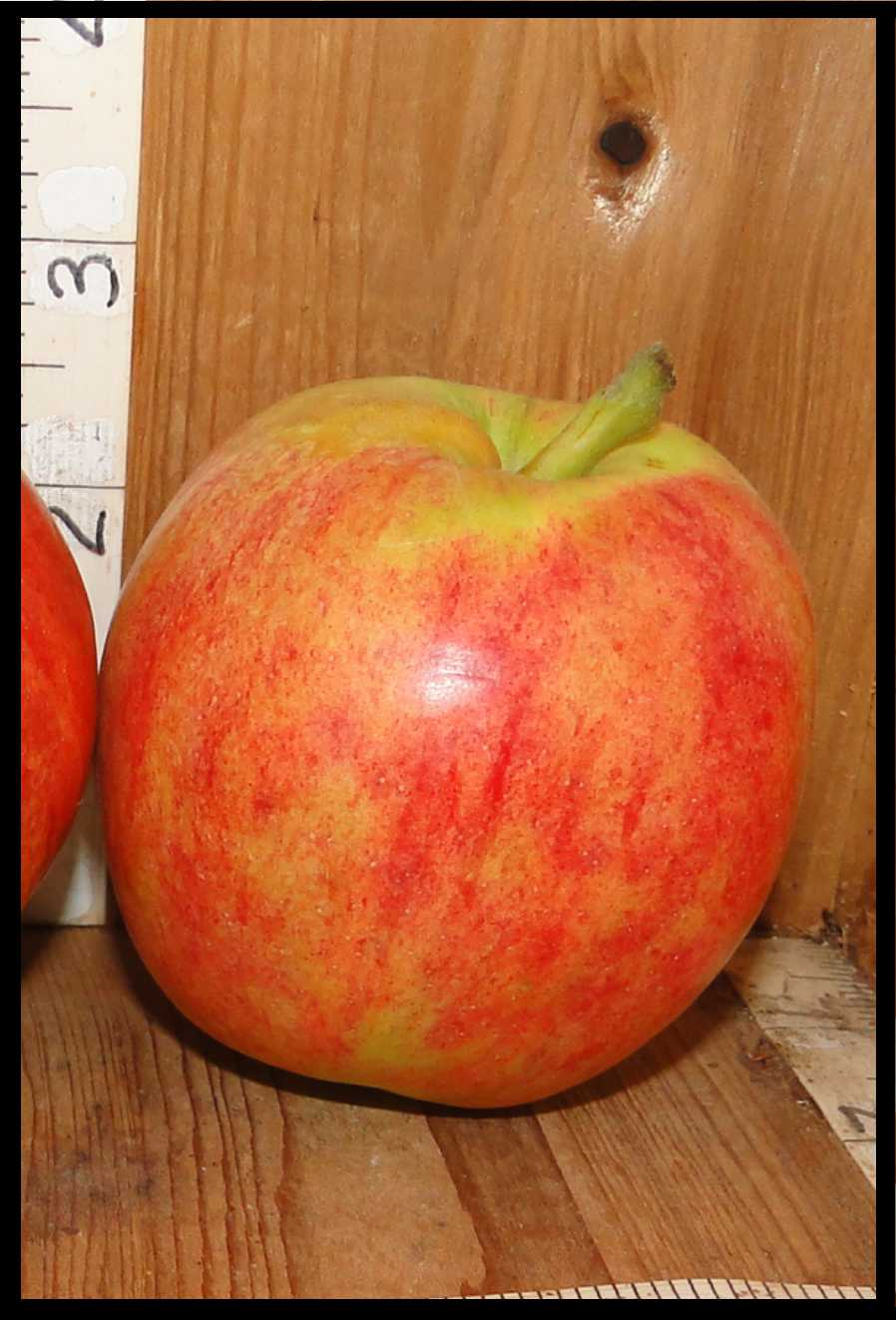 yellow apple largely covered with red blush
