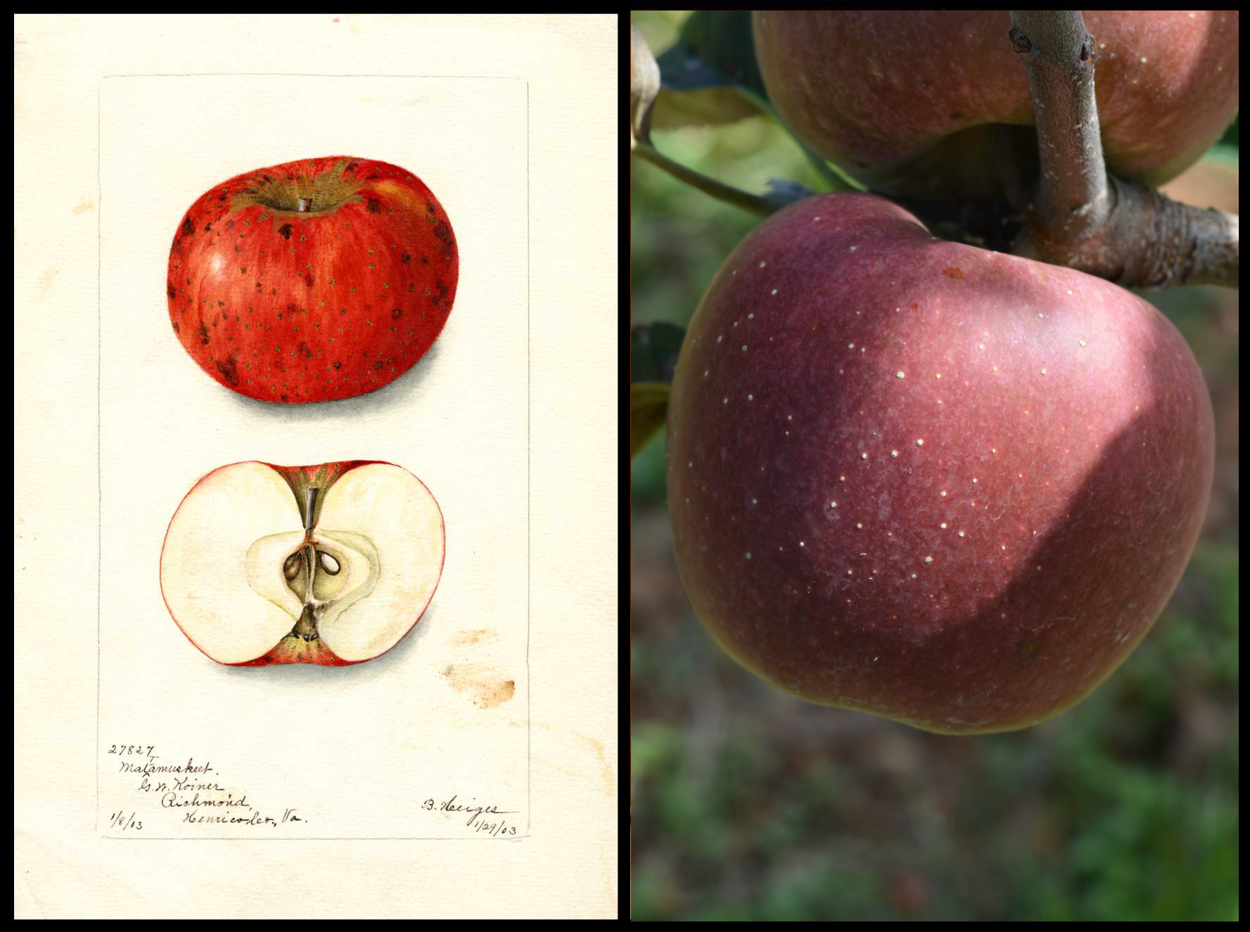 red apple with small white spots
