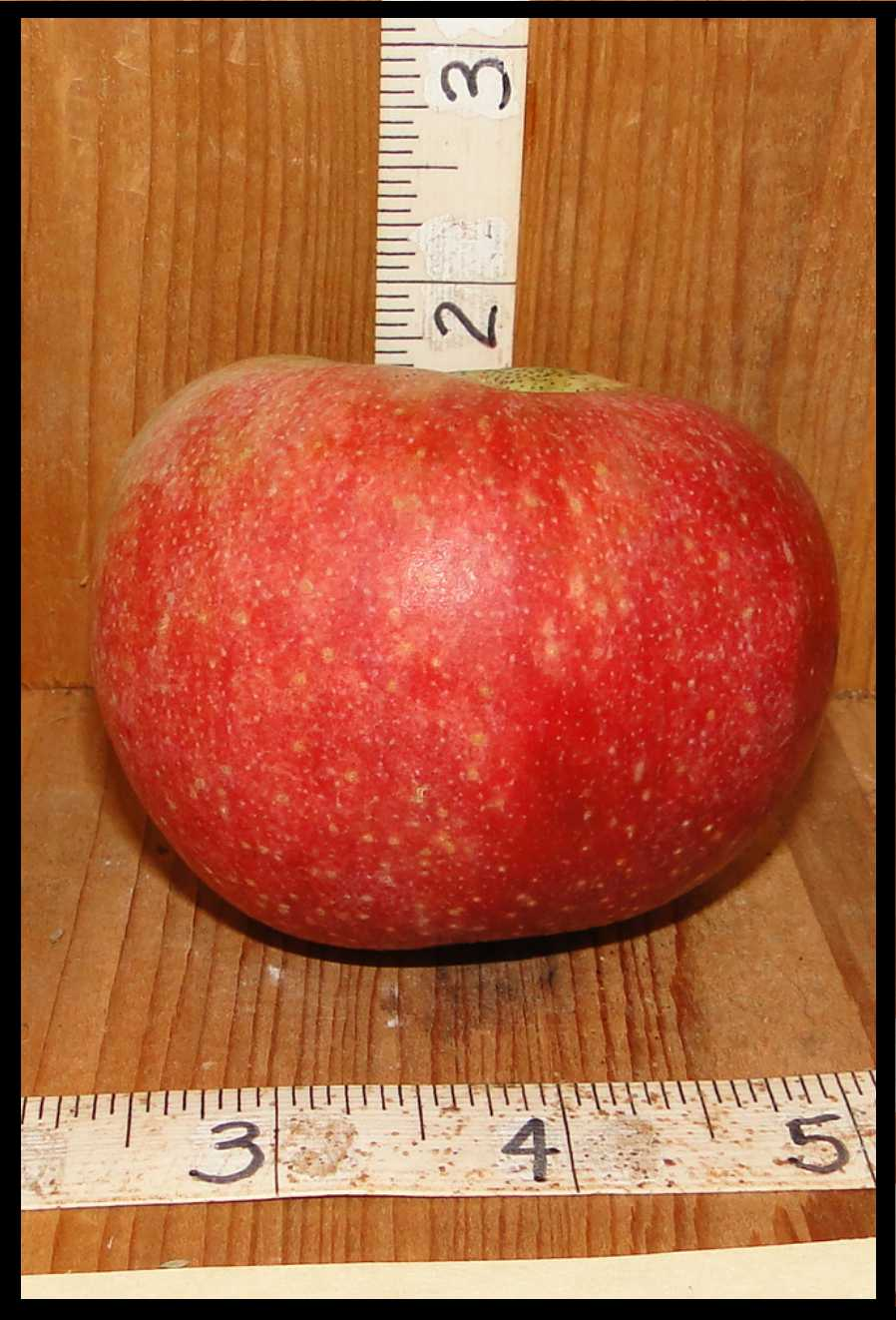 red apple with numerous very small white dots