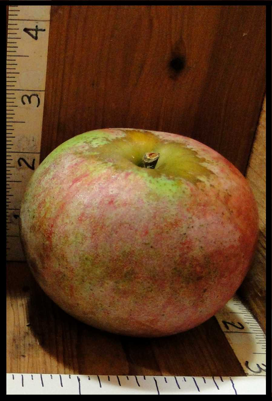 apple that is a dull mottled red and green