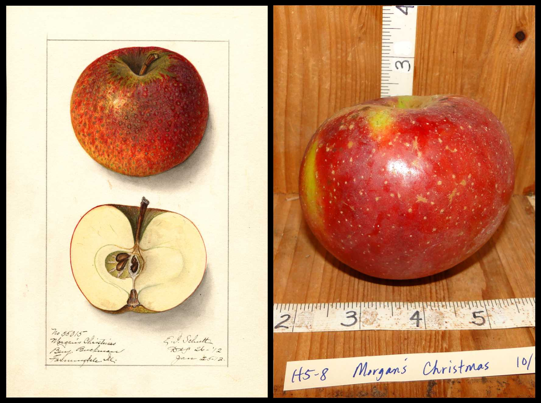 red apple with patches of yellow and small yellow spots