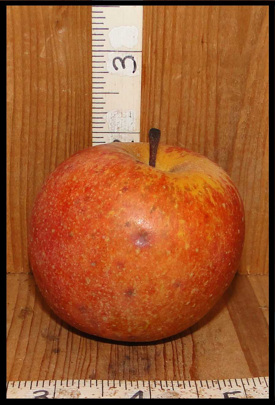 red and tan mottled apple