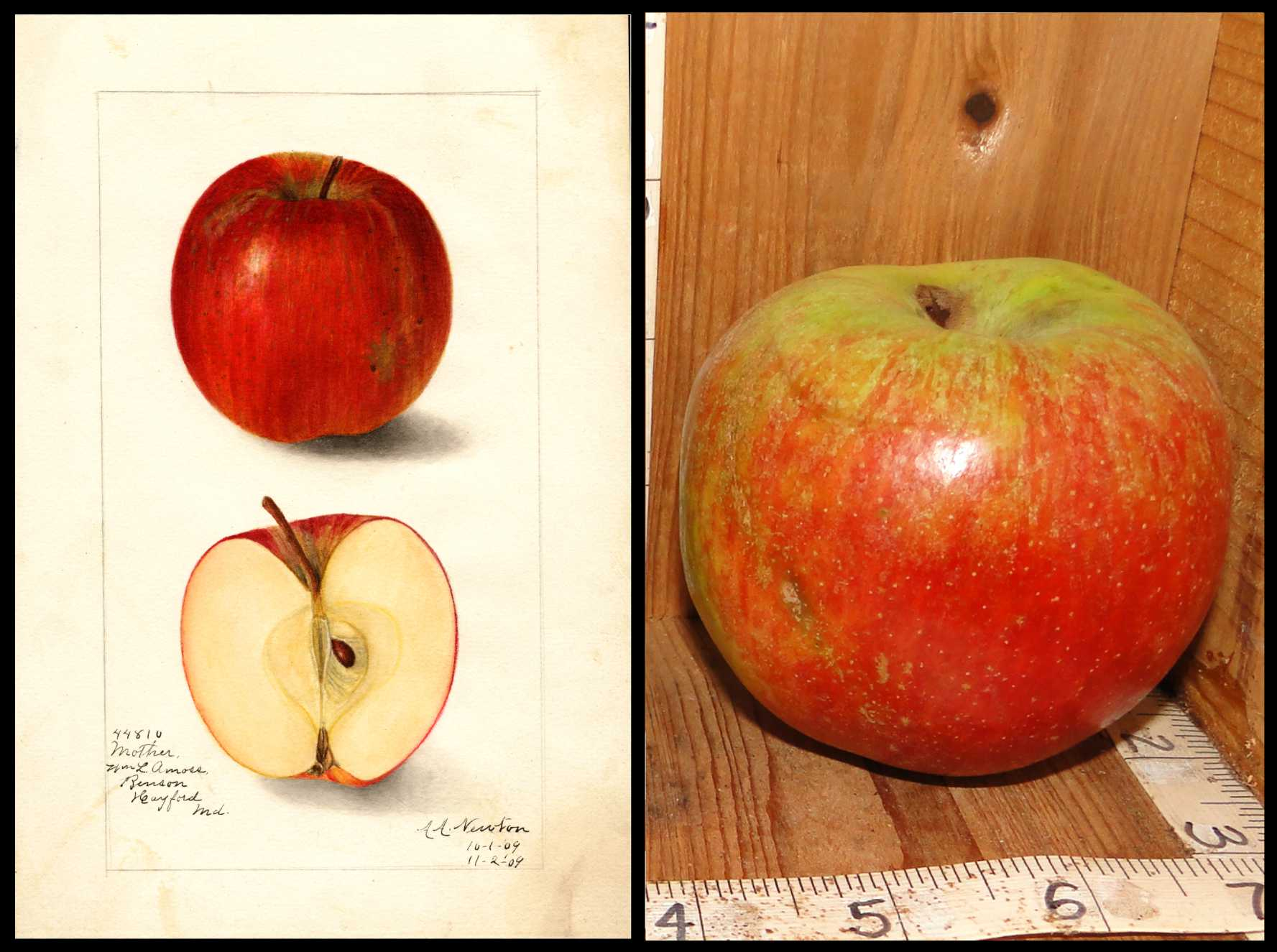 green apple with a solid red blush on the bottom two thirds of the apple