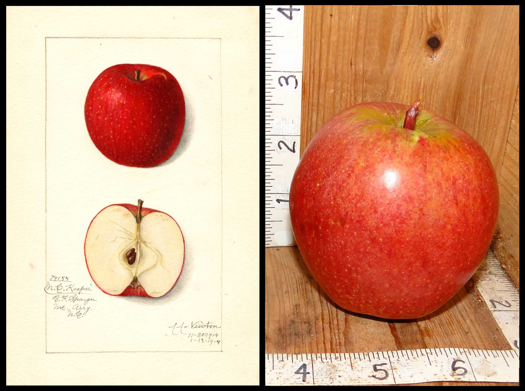 light red apple with some mottling