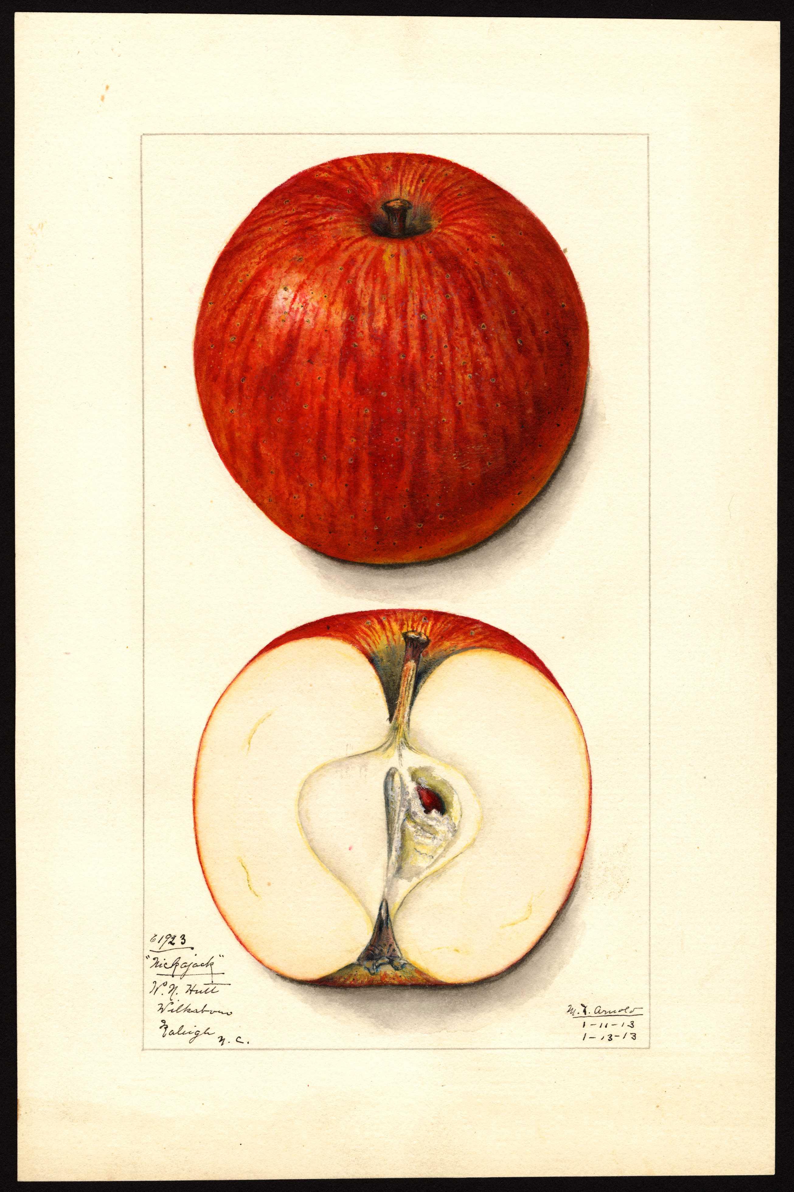 round red apple with darker red stripes