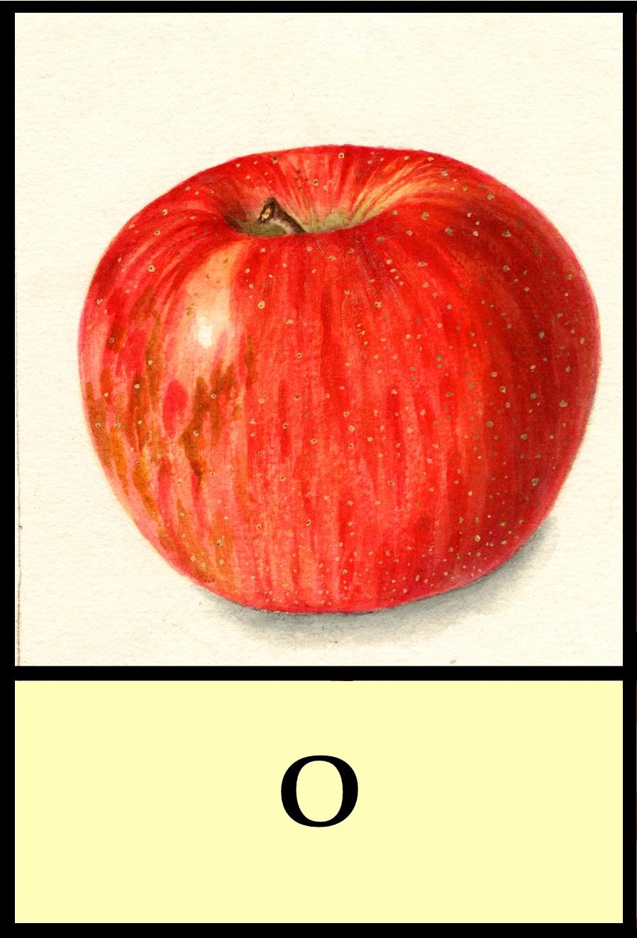 O apples