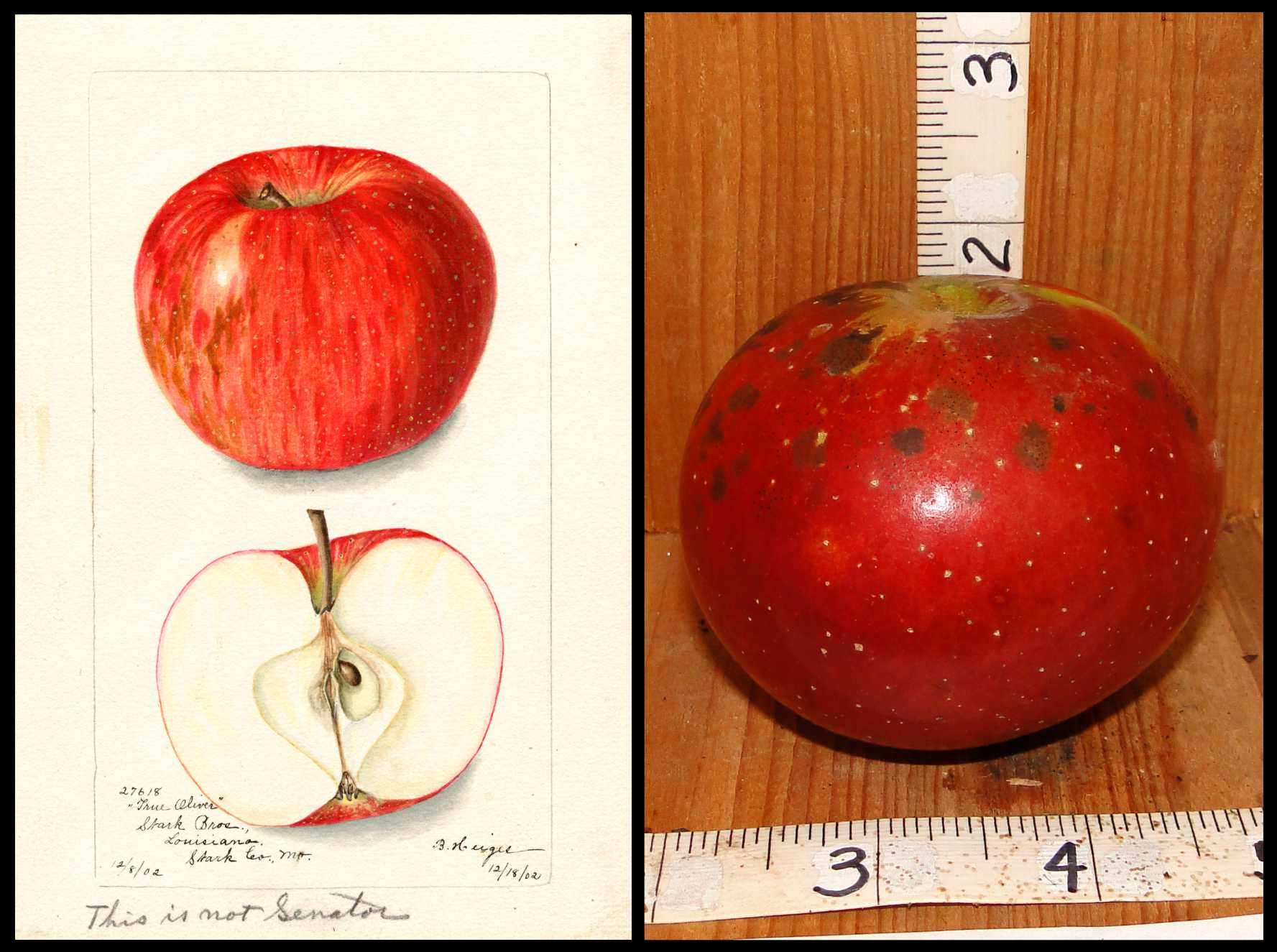 red apple with small white dots
