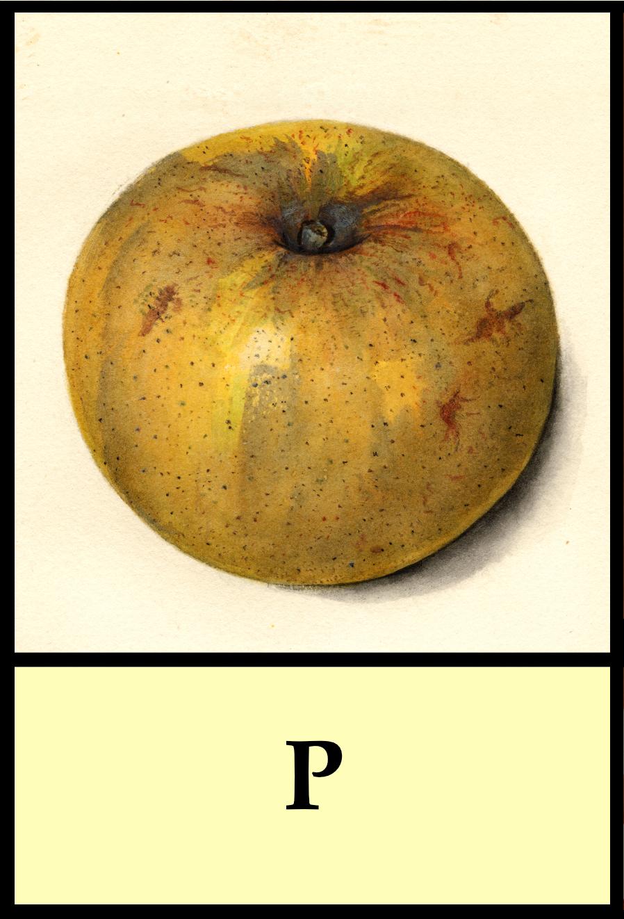 P apples