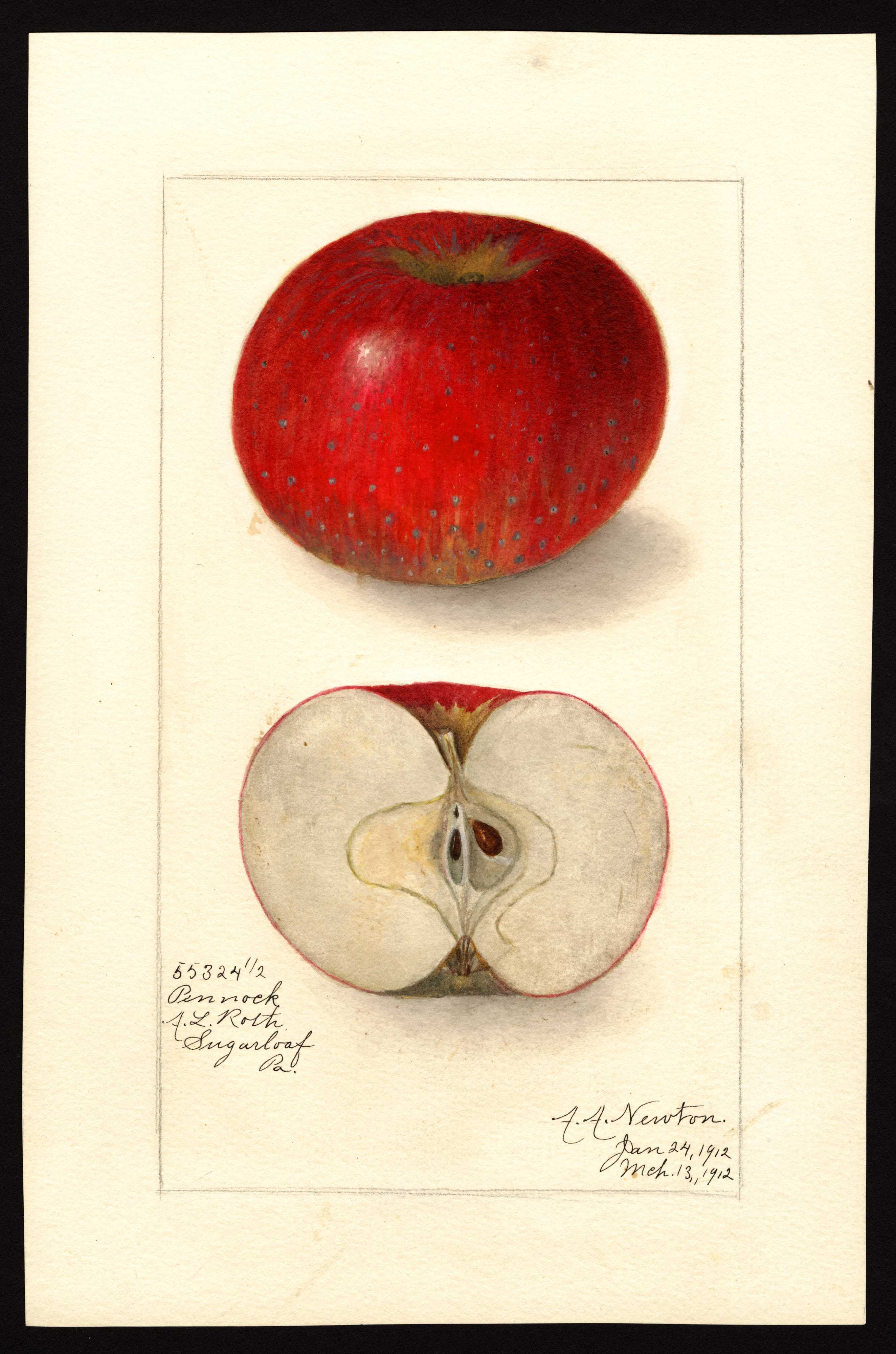 mottled and striped red apple