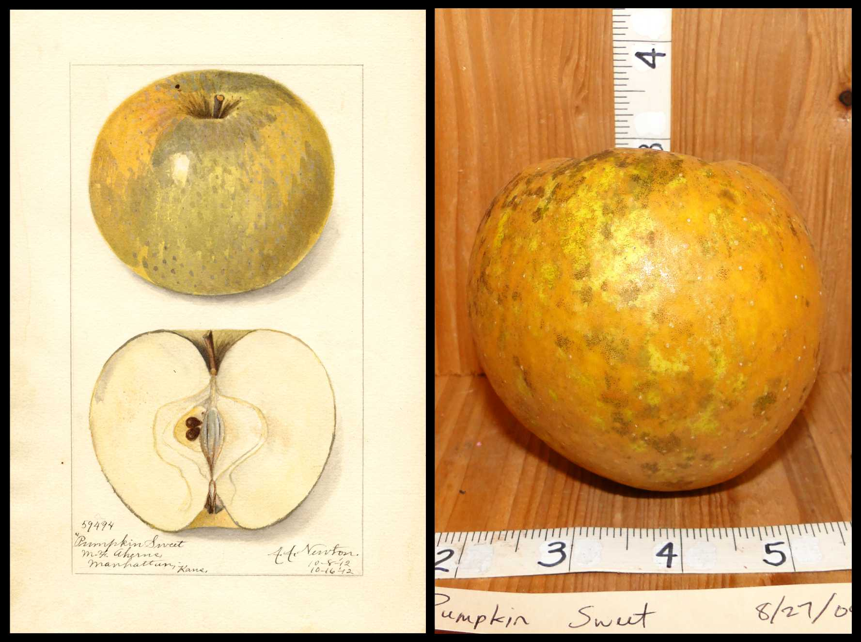 apple mottled yellow and rough tan