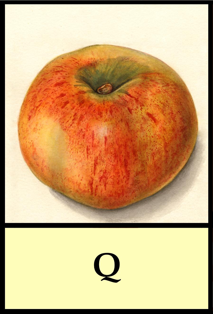 Q apples