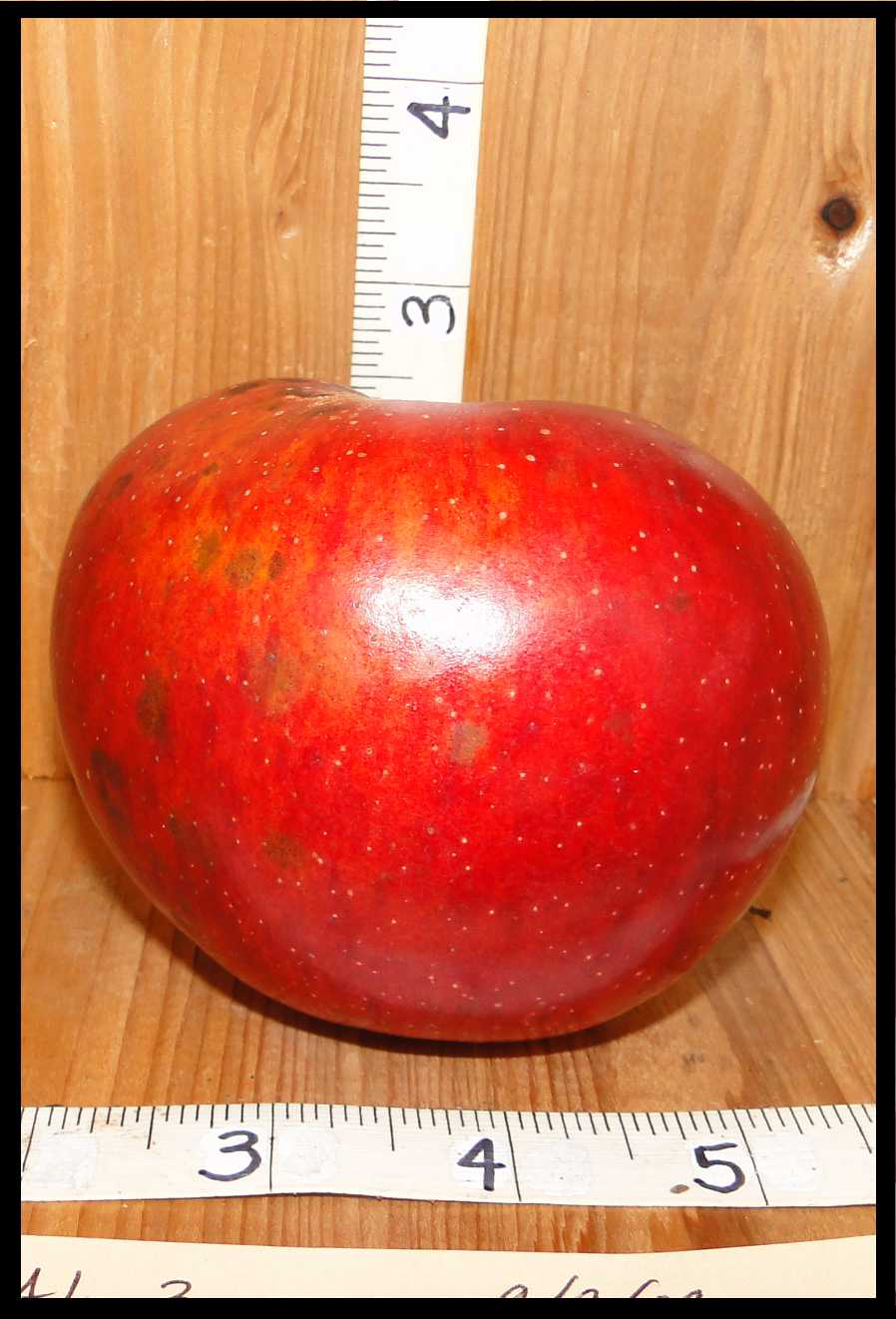 red apple mottled with a small amount of yellow