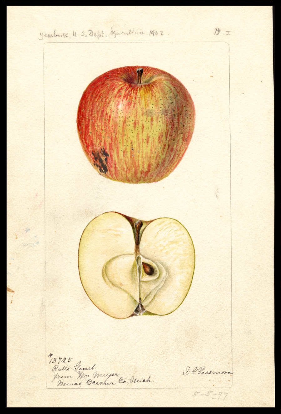 green apple with red blush and stripes
