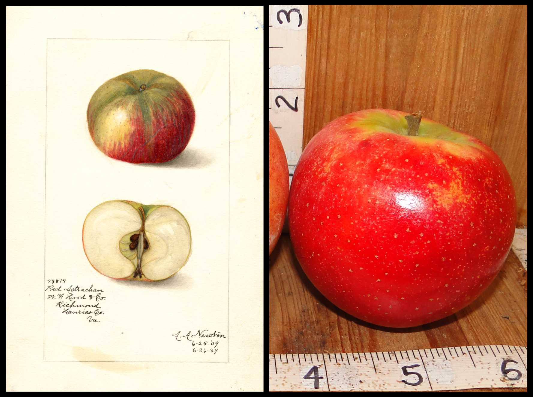 shiny red apple with small brown dots and green skin around the stem