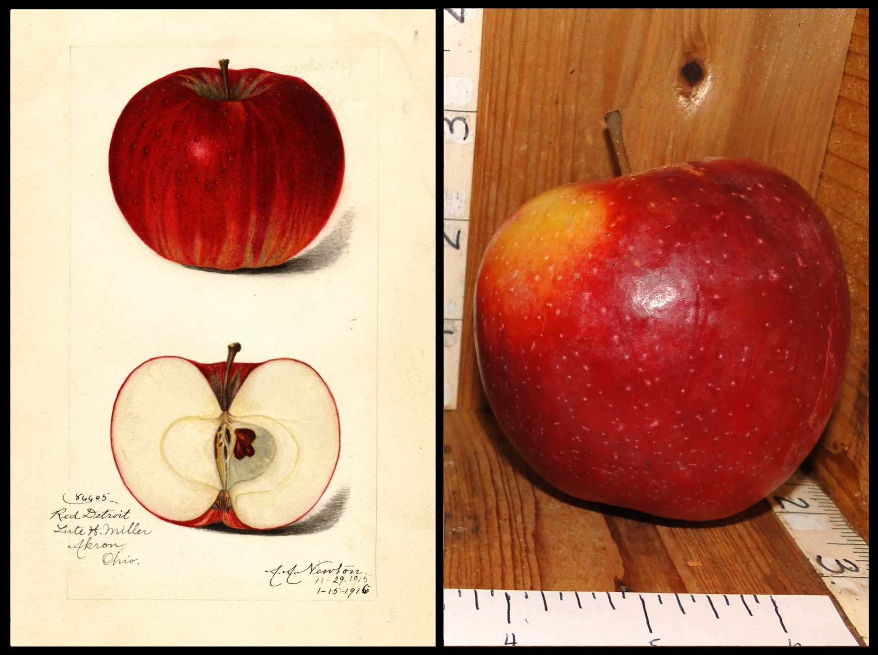 red apple with small brown dots and a patch of yellow