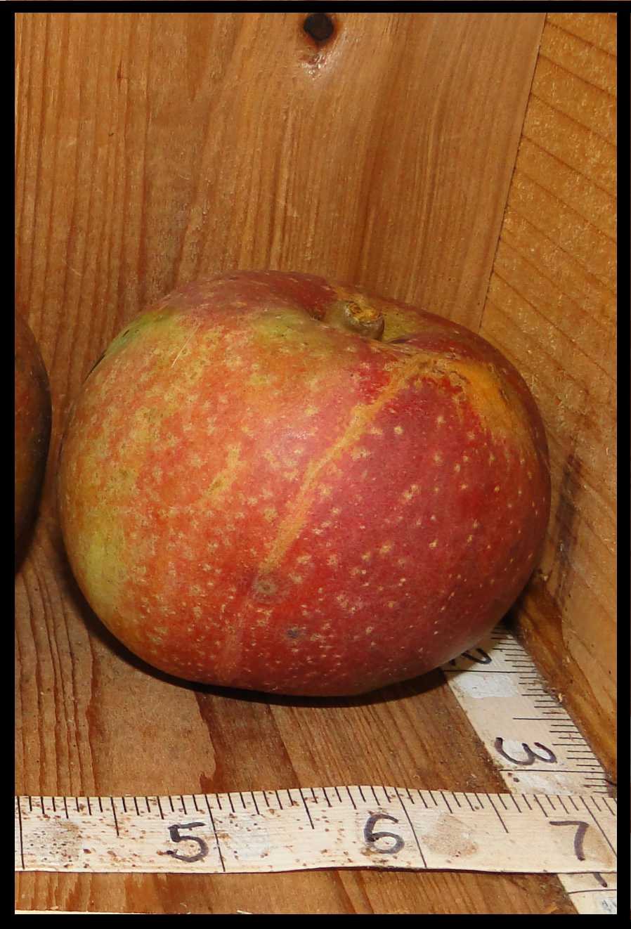 green and red mottled apple