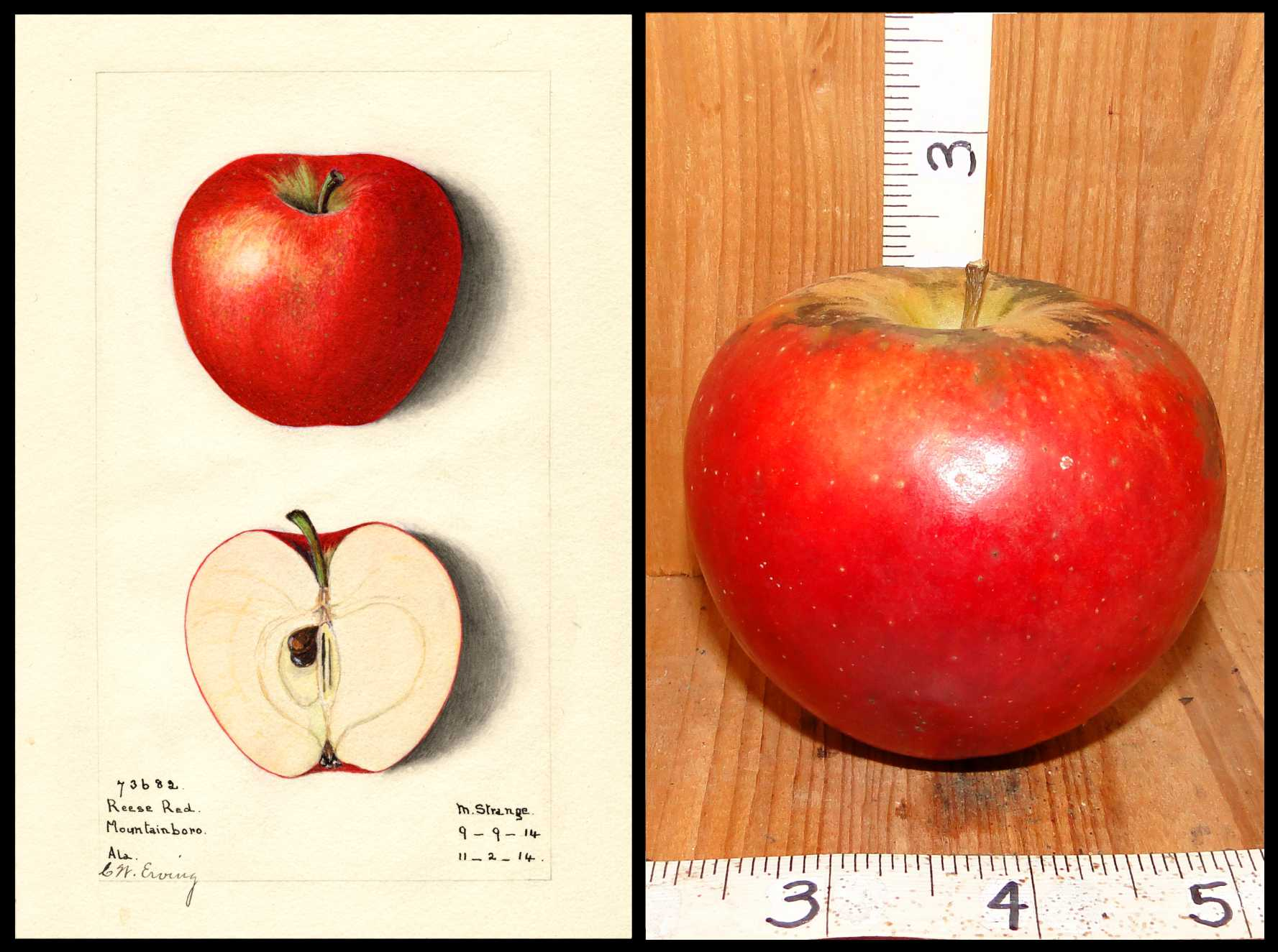 red apple with yellow near the stem