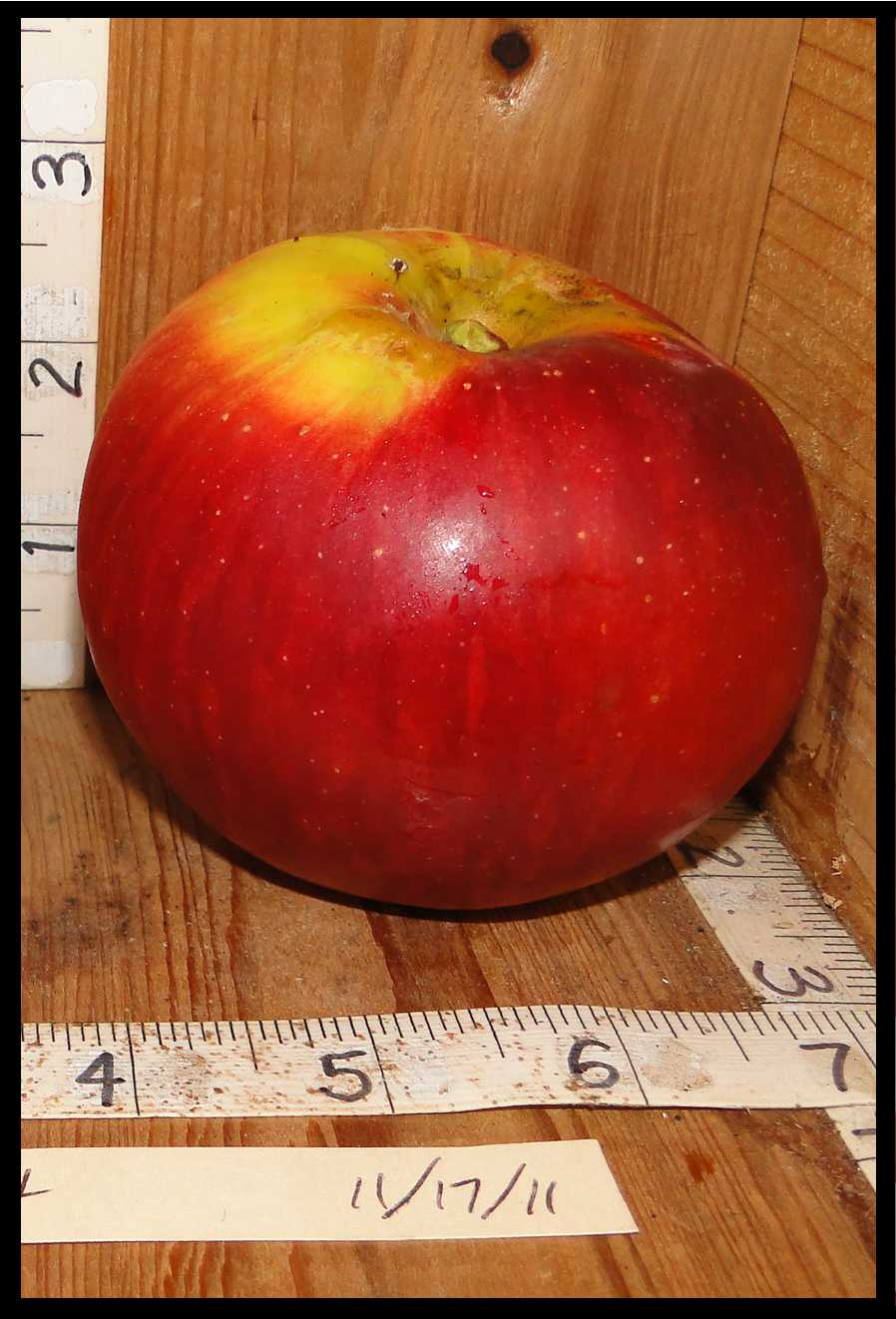 yellow apple almost entirely covered with streaky red