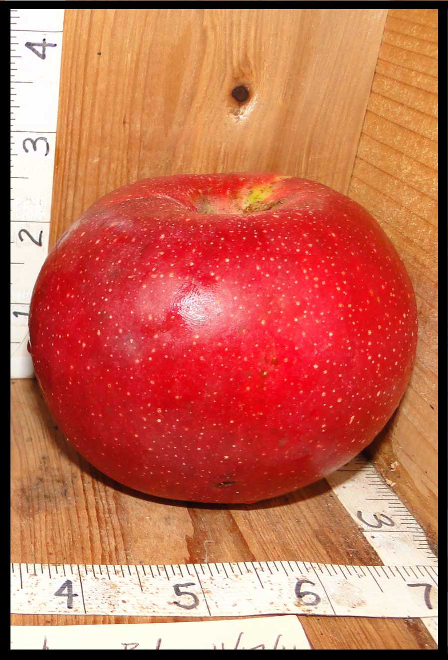 red apple with numerous tiny white dots